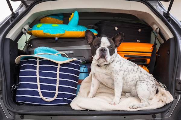 A dog sits in a car before heading to a vacation rental