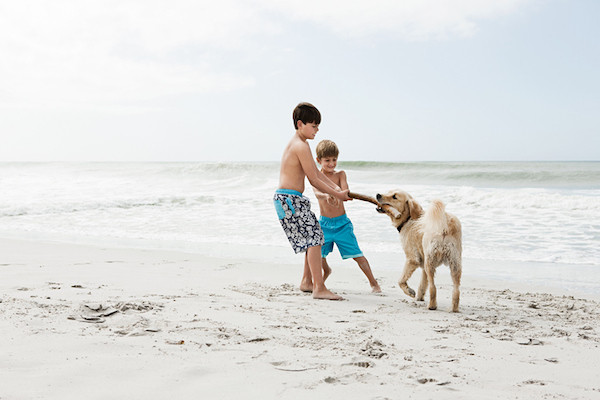 Children play with a dog on the beach